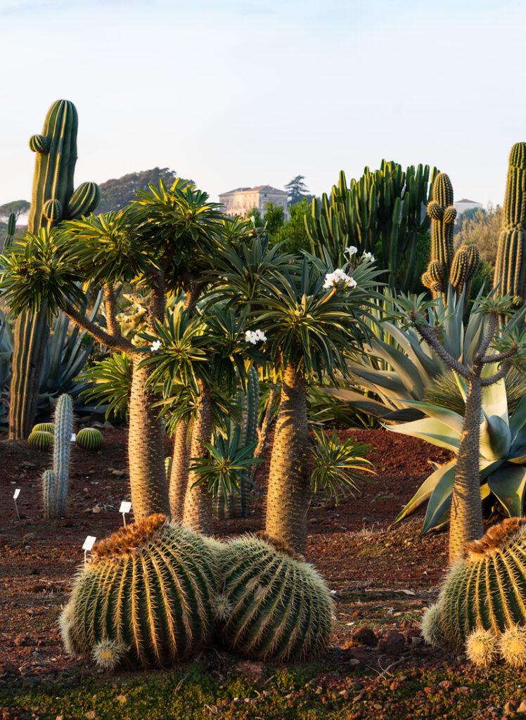 Il Parco Botanico Fondazione Radicepura